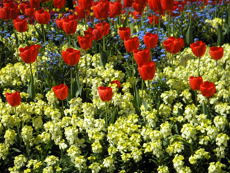 Bedding Plant Definition And Synonyms, What Is Meant By Bedding Plants