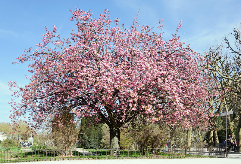 Blossom Definition And Synonyms Of Blossom In The English Dictionary