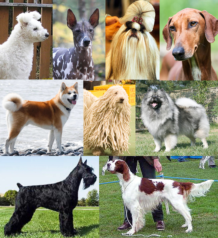 Anjing Definition And Synonyms Of Anjing In The Malay Dictionary