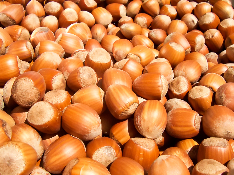 Kacang Definition And Synonyms Of Kacang In The Malay Dictionary
